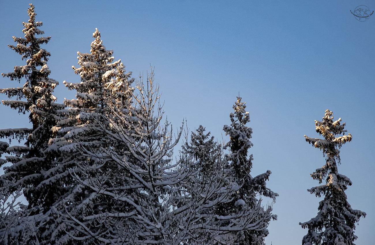 Co robić zimą w górach